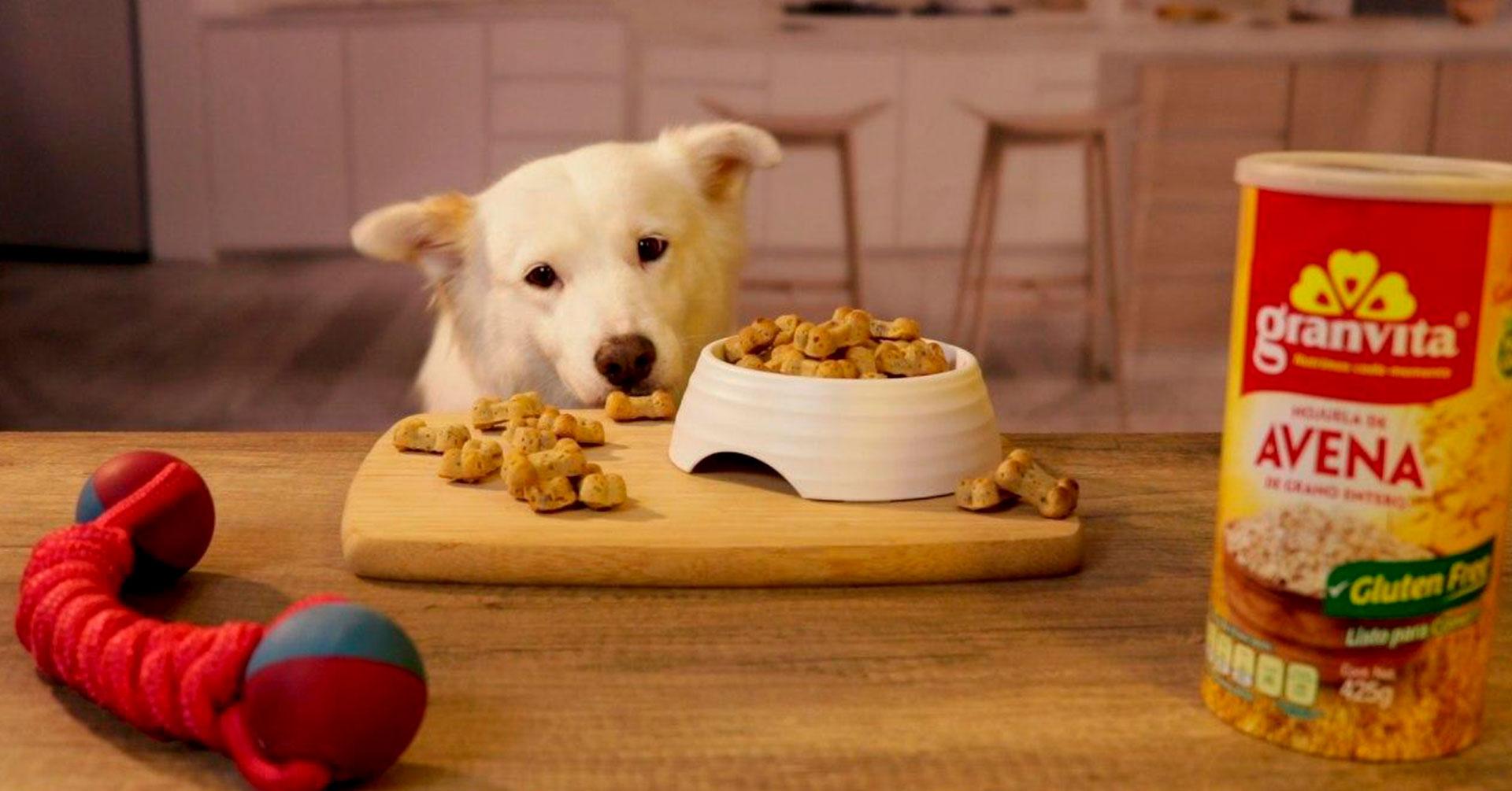 Aprende a cocinar premios para perros
