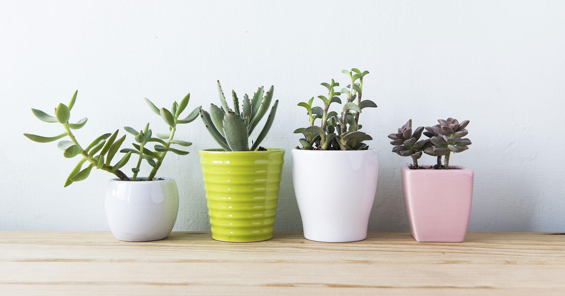 5 Plantas para tener energía positiva en tu casa